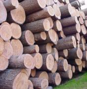 进口木材国内需求逐渐增大