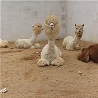 海南省哪里有卖羊驼的