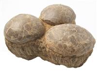 蛋形奇石场在线拍卖价格趋势讲解
