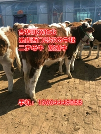 內蒙古肉牛養殖場 廠家2020年西門塔爾牛價格走勢