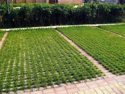 生態植草磚施工 點擊查看詳情