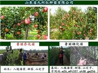 魯麗蘋果苗臨汾市寒冷地區能不能種植