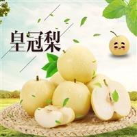 安徽皇冠梨 皇冠梨多少钱一斤