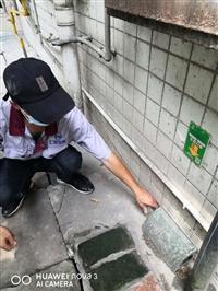 温江灭鼠公司批发