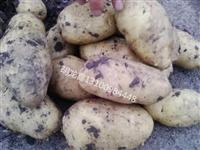 批发供应黑龙江土豆种子及商品薯