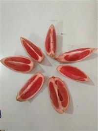 红宝石葡萄柚苗 台湾红宝石葡萄柚苗 红宝石西柚苗 西柚苗批发