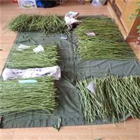 黄菊油桃树苗新品种-肥桃树苗结果周期