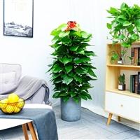 武汉室内花卉出租,写字楼绿植租赁,室外苗木报价公司园林租摆