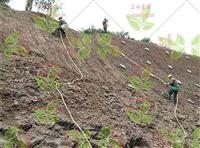 咸宁矿山护坡植草绿化种子