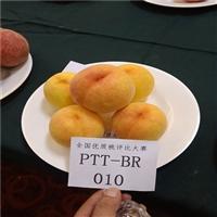 哪里卖桃树苗-36-5油蟠桃树苗出售价格-哪里卖嫁接桃树苗