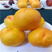 哪里出售桃树苗-黄金蟠桃树苗哪里有-哪里有新品种桃树苗