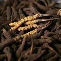 廣州大道冬蟲夏草回收價格表-盛達禮品回收
