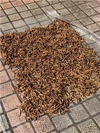 瑟州冬蟲夏草回收哪里可以-盛達禮品回收
