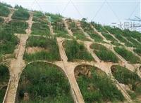 咸寧人字骨架邊坡灌木種子優質