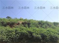 咸宁开采荒废矿山干旱草籽