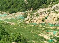 咸宁高速边坡长期复绿的草籽