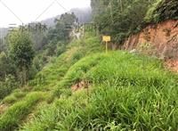 湖北批发矿山绿化常用种子