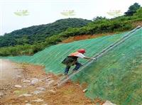 咸宁高速边坡绿化草籽卖家