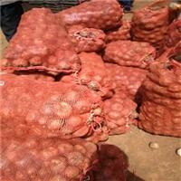 大理魔芋种子  魔芋叶面果  魔芋种子出售