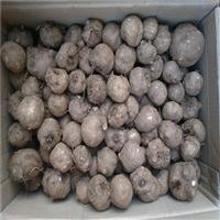 道真魔芋种子  珠芽魔芋种植技术  魔芋种子公司