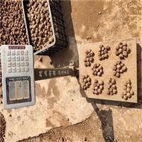 安龙魔芋种子  珠芽魔芋多少钱1斤  魔芋种子多少钱一吨