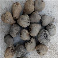 砚山魔芋种子  黄魔芋价格多少钱一斤  贵州省魔芋种植基地