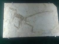 龍化石去哪能賣好價錢