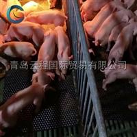 青島云程廠家直銷 豬舍橡膠墊 豬圈欄墊 定位欄墊 保溫防滑墊