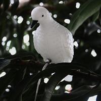 夹子鸽子灯 LED树木小鸟装饰灯 512控制园林生态景观灯