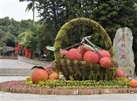 五色草造型城市中的風景線-景觀綠雕園林綠化