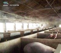 猪场喷雾除臭消毒