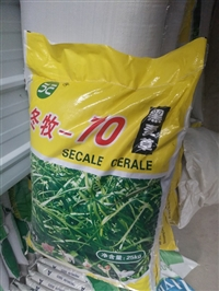 冷天种植冬长草 冬牧70 黑麦草 特高黑麦草就是好