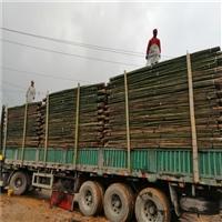各类江西竹竿批发 大小竹竿 粗细竹竿 农用园林用出口用的竹竿批