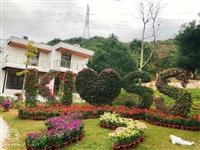 五色草造型-園林造景綠雕制作生產廠家