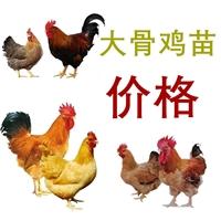 厂家供应大骨鸡苗价格,孵化场大骨鸡苗价格批发,大骨鸡苗价格价