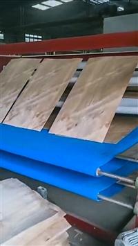 中工WDHG网带式 多层单板干燥机