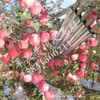 厂家直销 超亮加厚农用果树反光膜