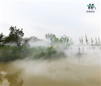 攀枝花市冷雾造雾设备安装
