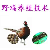 供给野鸡怎样养殖技巧,批发野鸡怎样养殖技巧价格,野鸡怎样养殖
