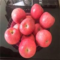 1年红肉苹果树苗价格咨询