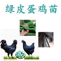 供應綠皮蛋雞苗,綠皮蛋雞苗批發