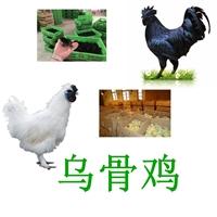 廠家供應烏骨雞,孵化場烏骨雞