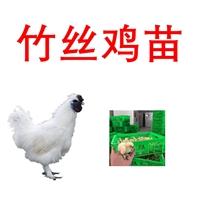 銷售竹絲雞,廠家批發竹絲雞價格
