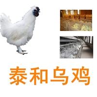 供應泰和烏雞,全國泰和烏雞批發