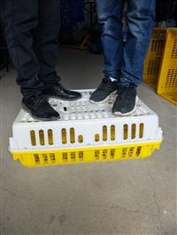 廣西成雞運輸籠、塑料雞籠
