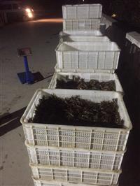 江苏小龙虾 养虾的基本知识 龙虾种苗批发求购