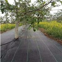 鋪設園藝地布墊層時留意哪些問題