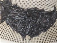 三黄塘虱鱼苗供应商电话