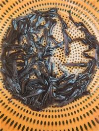 塘虱鱼苗批发大量出售