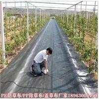 出售1米-4米除草布 黑色园艺地布价格大全